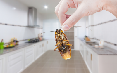What to Expect from our Residential Pest Control Services
