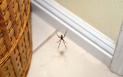 What Household Products Kill Spiders?