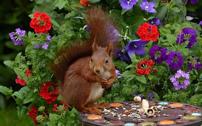 8 Ways To Get Rid of Squirrels