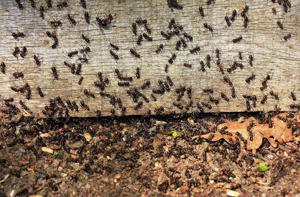 ants outside of wooden porch