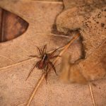 pest control for spiders in Castle Rock