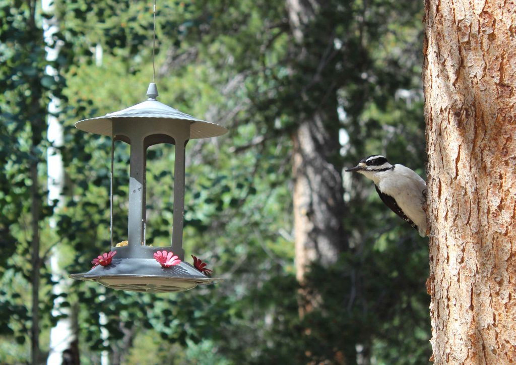 bird control no feeders on trees