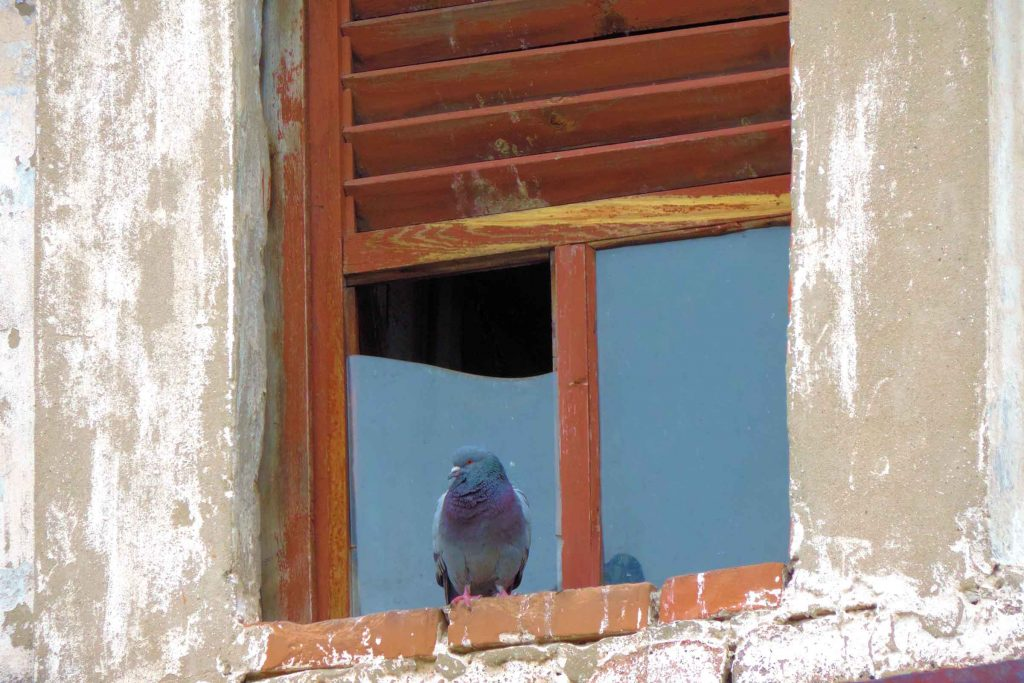 window pigeons can get in.