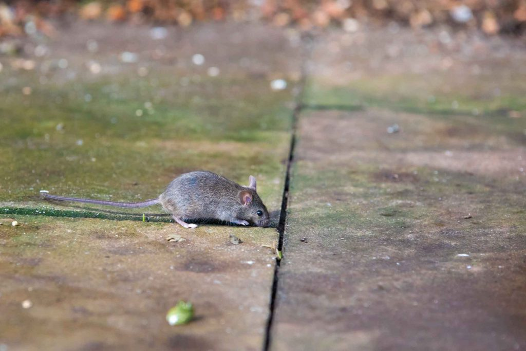 general pest control  to prevent mice from entering homes