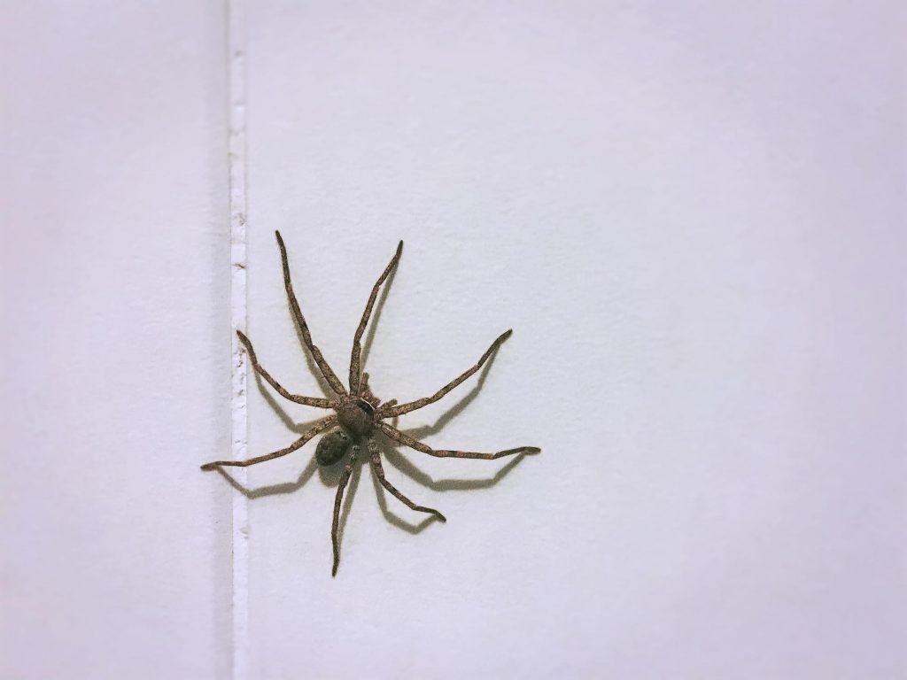 spider removal in Colorado Springs