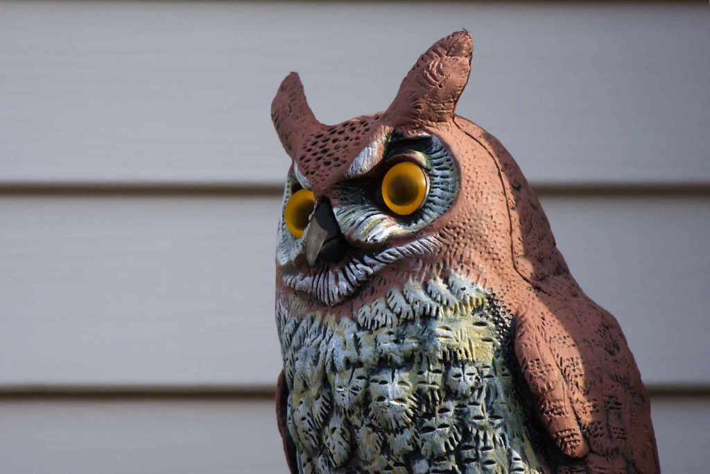 plastic owl with screeching noises to scares birds away