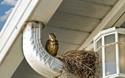 What Noises Scare Birds Away?