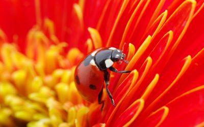 5 Tips for Garden Pest Control