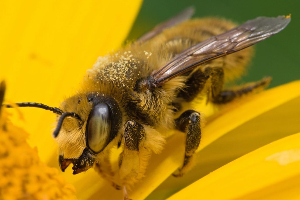 leaf cutter bee control for gardens