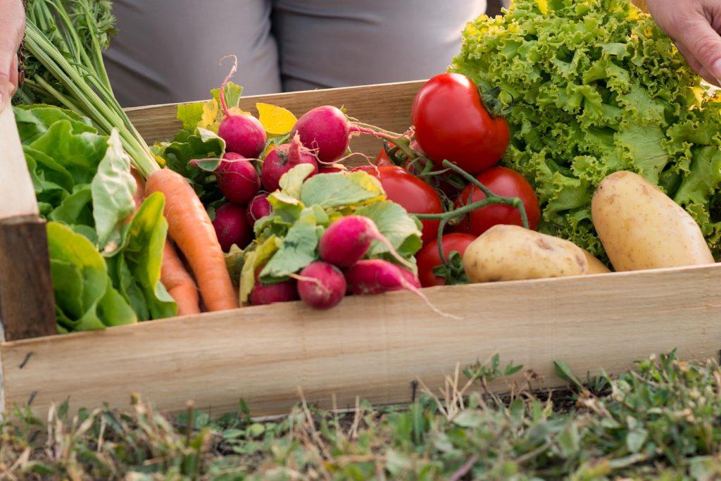 omnis pest control in vegetable garden