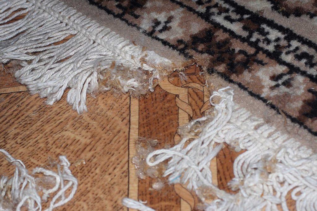 house mouse destroys rug