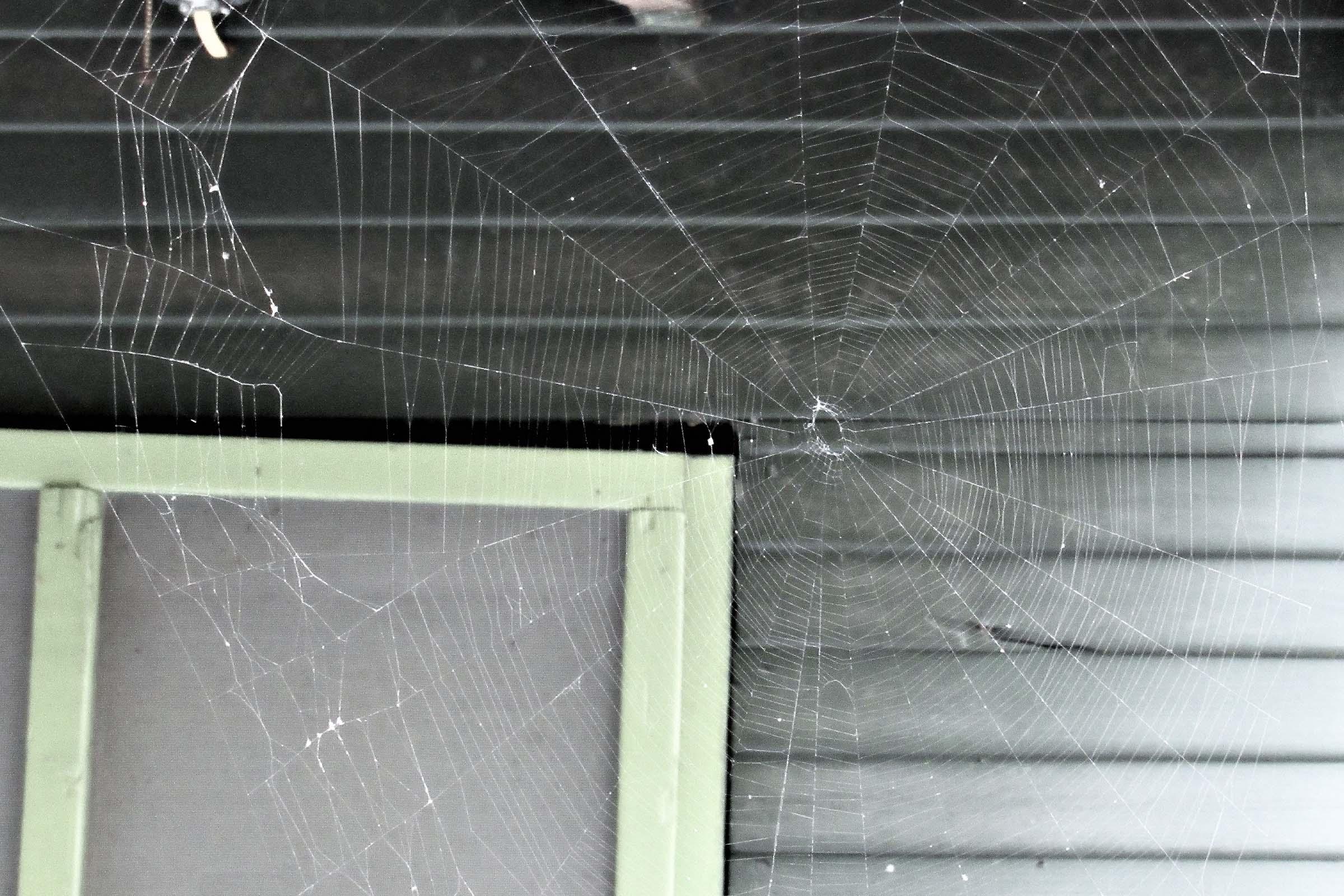 spider web on porch